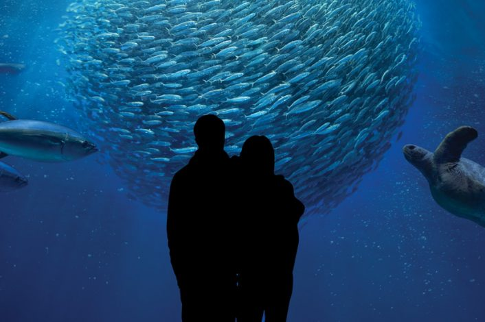 Monterey Bay Aquarium Tickets